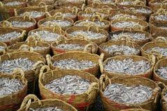 Groupe de panier d'anchois Photo libre de droits