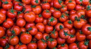 Groupe de papier peint rouge de tomates Image libre de droits