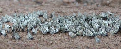 Groupe de papillons images stock