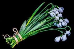 Groupe de perce-neige de fleurs Photo stock