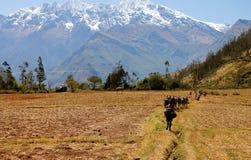 Groupe de personnes faisant le trekking Photo stock