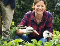 Groupe de personnes plantant le légume en serre chaude Photo stock