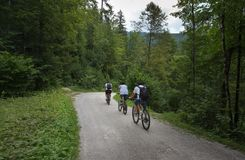 Groupe de personnes vélos de monte dans la forêt Photos libres de droits