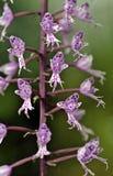 Groupe de petite orchidée rose sur le fond vert Image stock