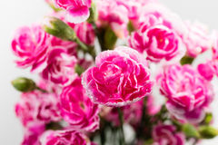 Groupe de petites roses roses Image stock