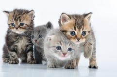 Groupe de petits chatons photo stock