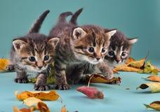 Groupe de petits chatons dans des feuilles d'automne images stock