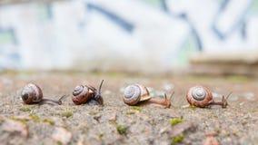 Groupe de petits escargots allant en avant Image stock