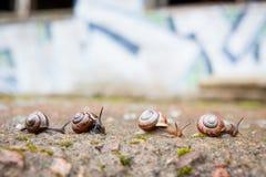 Groupe de petits escargots allant en avant Photo libre de droits