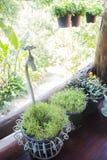 Groupe de peu de plante verte Image stock
