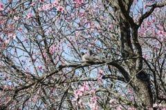 Groupe de pigeons de couples beau de fleurs roses Photos libres de droits