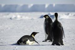 Groupe de pingouin en Antarctique image libre de droits