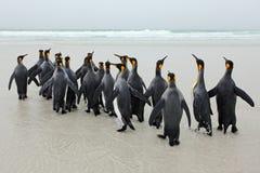 Groupe de pingouins de roi revenant de la plage du TU de mer avec la vague un ciel bleu Photo stock