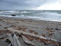 Groupe de pinguins sur un rivage à la réservation otway de seno en piment Image stock