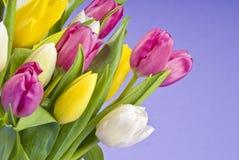 Groupe de plan rapproché de tulipes photographie stock libre de droits