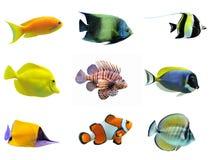 Groupe de poissons photos libres de droits