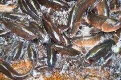 Groupe de poissons Images stock