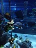 Groupe de poissons Image stock