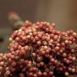 Groupe de poivron rouge Photo libre de droits