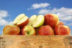Groupe de pommes de braeburn Photo libre de droits