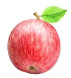 Groupe de pommes rouges d'isolement sur le fond blanc Images libres de droits