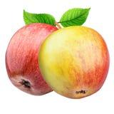 Groupe de pommes rouges d'isolement sur le fond blanc Photo libre de droits