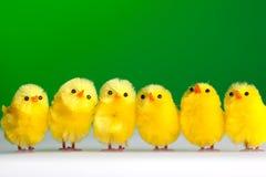 Groupe de poulets Photos libres de droits
