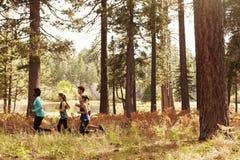 Groupe de quatre jeunes amis adultes courant dans une forêt Image stock