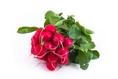 Groupe de radis de jardin Image libre de droits