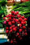 Groupe de radis et d'oignons Photos stock