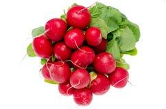 Groupe de radis frais Photo stock