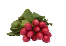 Groupe de radis frais d'isolement Photo stock
