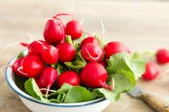 Groupe de radis frais dans une cuvette Photographie stock