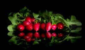 Groupe de radis sur le fond noir Photographie stock