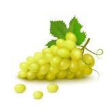 Groupe de raisins blancs Image libre de droits