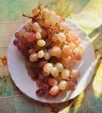 Groupe de raisins d'une plaque Photographie stock