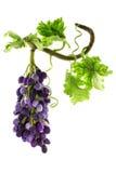 Groupe de raisins faits main de laine felted Images libres de droits