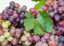 Groupe de raisins juteux sur un fond blanc Images stock