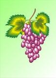 Groupe de raisins pourpre photo stock