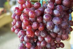 Groupe de raisins rouges images stock