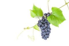 Groupe de raisins rouges Photos stock