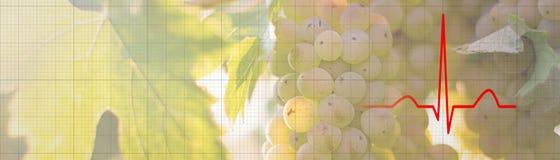 Groupe de raisins sur une vigne dans le concept de nourriture biologique de soleil images libres de droits