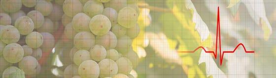 Groupe de raisins sur une vigne dans le concept de nourriture biologique de soleil photographie stock libre de droits