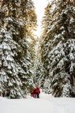 Groupe de randonneurs en montagnes carpathiennes photos stock