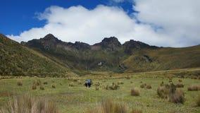 Groupe de randonneurs marchant au milieu de la vallée en direction du volcan de Ruminahui à l'intérieur du parc national du Cotop Photo libre de droits