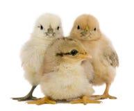 Groupe de rester de trois nanas Image libre de droits