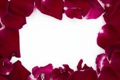 Groupe de Rose Petals rouge, vue, de copie de l'espace la terre de retour photographie stock libre de droits