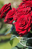 Groupe de roses Image stock