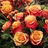 Groupe de roses d'eau-de-vie fine de cerise Photos libres de droits