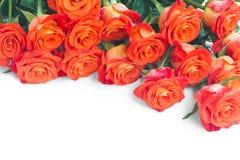 Groupe de roses fraîches image libre de droits